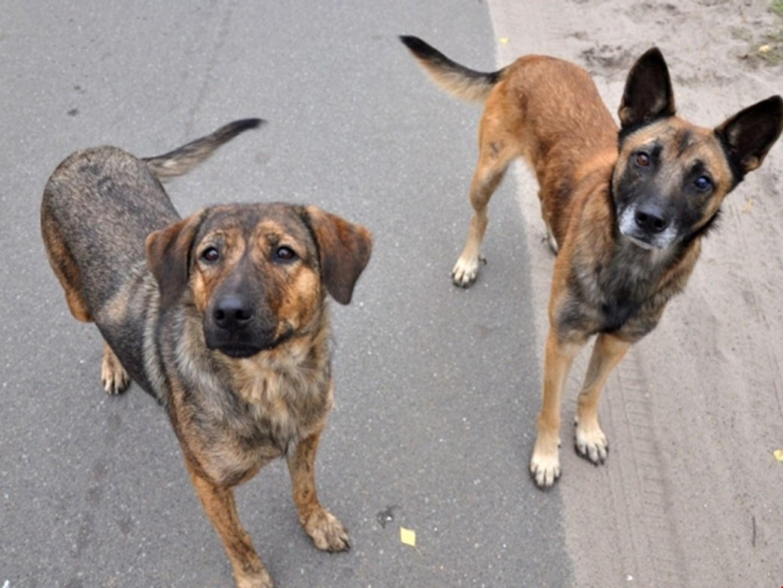В Ужгороді відловлюватимуть та стерилізуватимуть безпритульних тварин