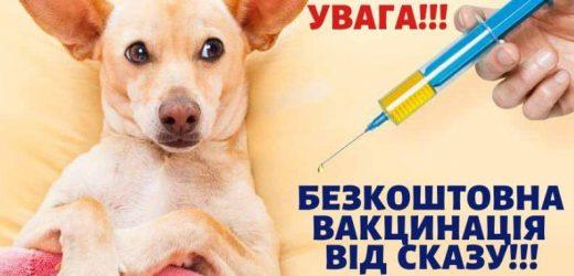 У четвер в Мукачеві безкоштовно вакцинуватимуть тварин від сказу