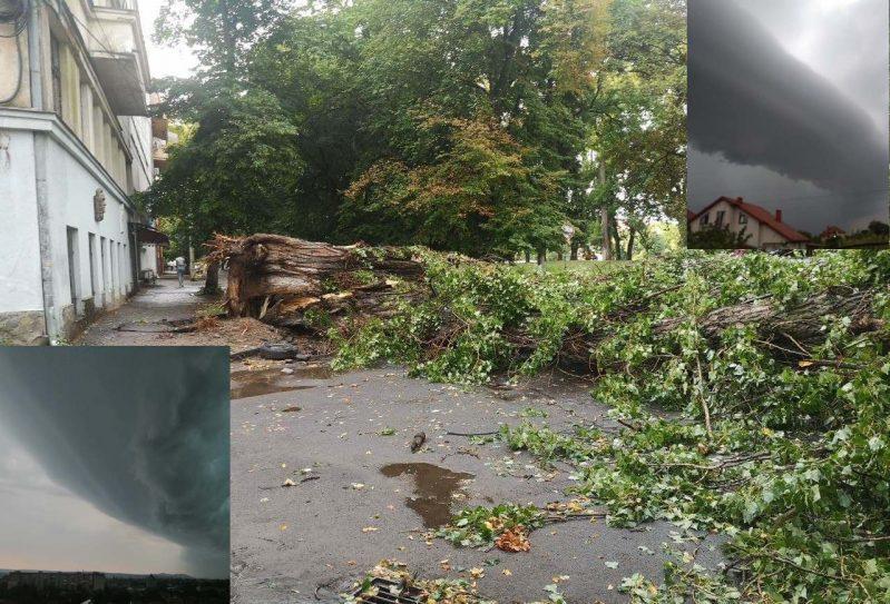 Шквальний буревій повалив в Ужгороді 7 дерев