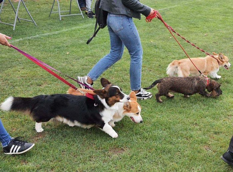 В Ужгороді триває міжнародна виставки собак «Перлина Карпат-2021»