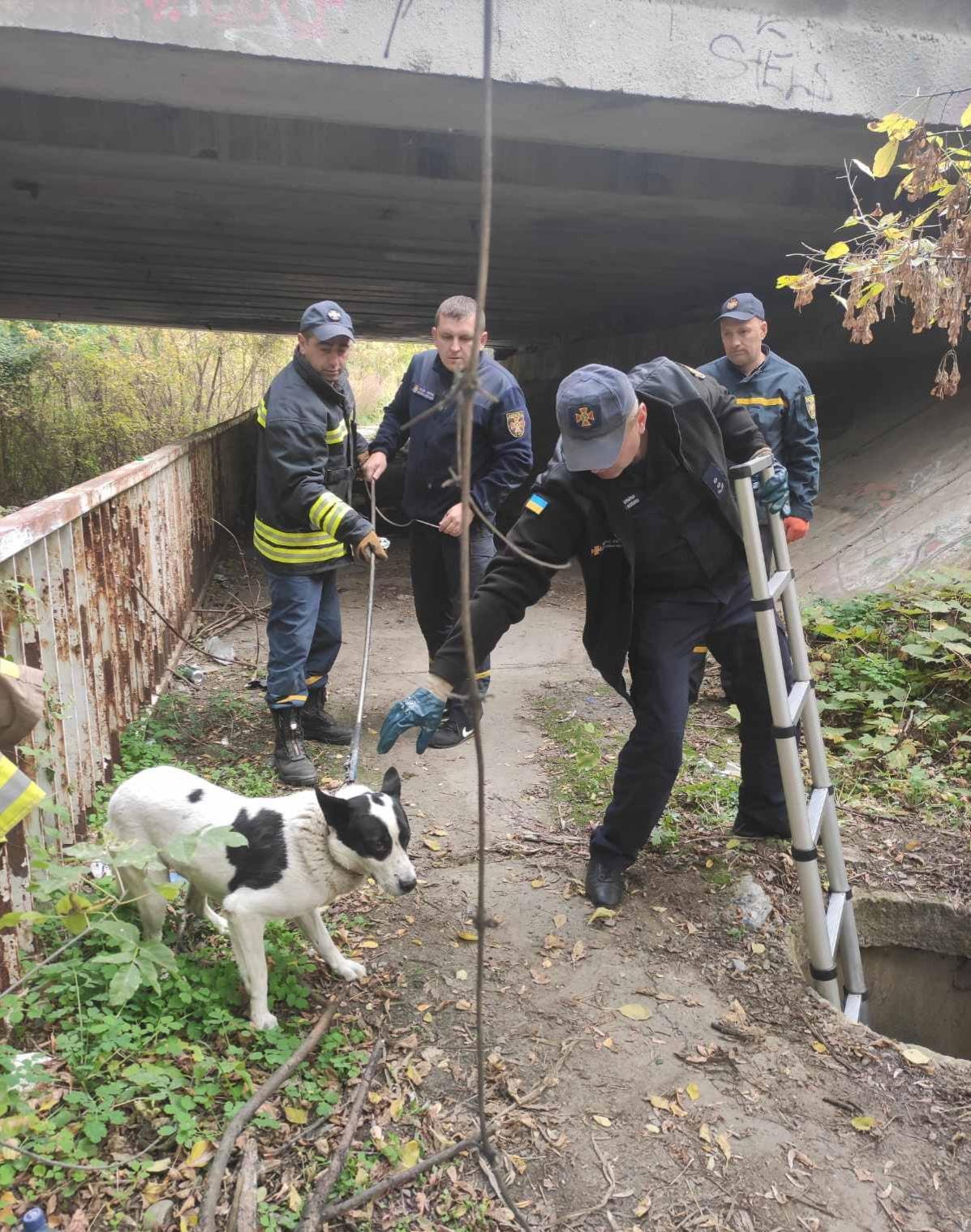 В Ужгороді рятувальники допомогли собаці, що провалився у відкритий люк