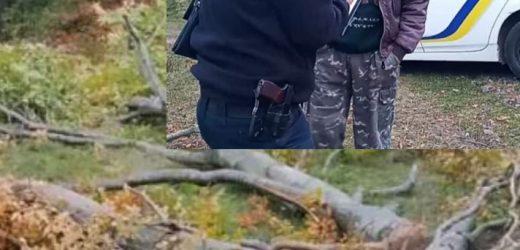 На території Ужанського нацпарку відбулася незаконна порубка дерев